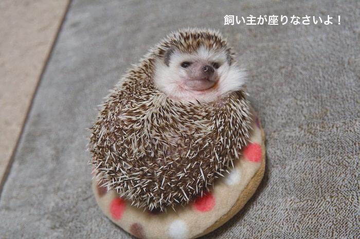 f:id:chikojirou:20170511222224j:plain