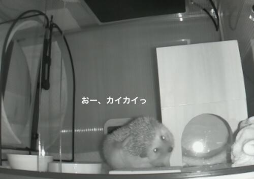 f:id:chikojirou:20170511222307j:plain