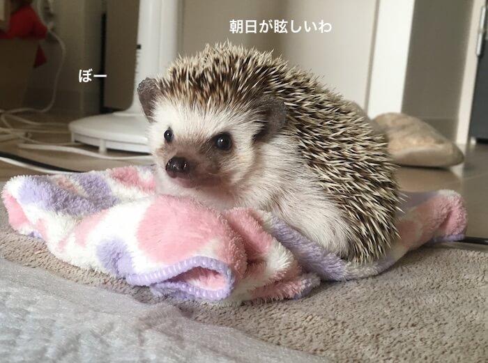f:id:chikojirou:20170512222119j:plain