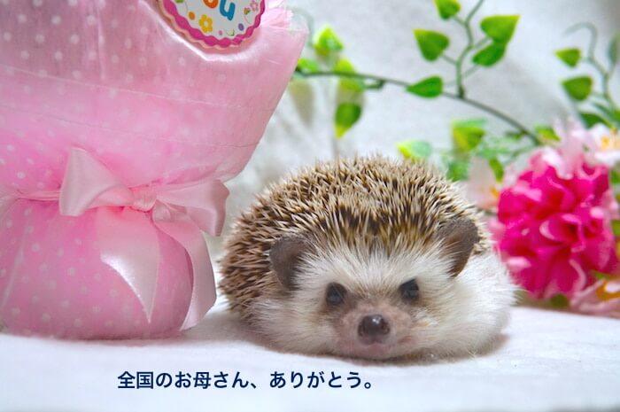 f:id:chikojirou:20170513172023j:plain