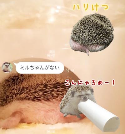 f:id:chikojirou:20170513172211j:plain