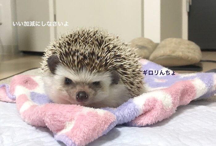 f:id:chikojirou:20170515213841j:plain