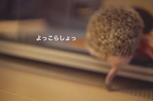 f:id:chikojirou:20170515213852j:plain