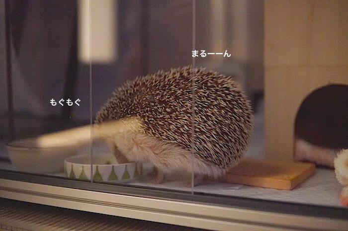 f:id:chikojirou:20170515213917j:plain