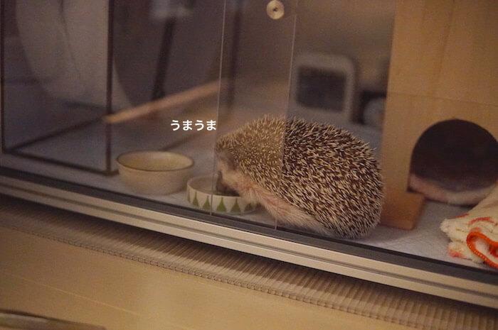 f:id:chikojirou:20170515213928j:plain