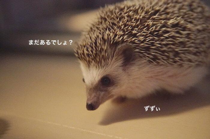 f:id:chikojirou:20170516221315j:plain