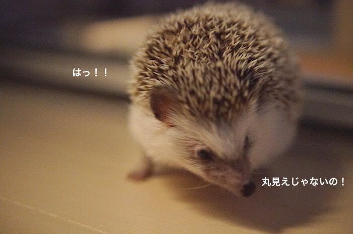 f:id:chikojirou:20170516221323j:plain