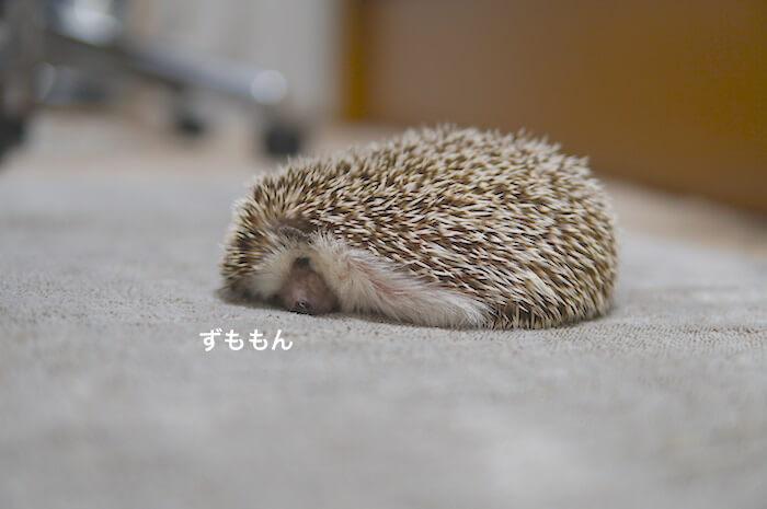 f:id:chikojirou:20170518221320j:plain