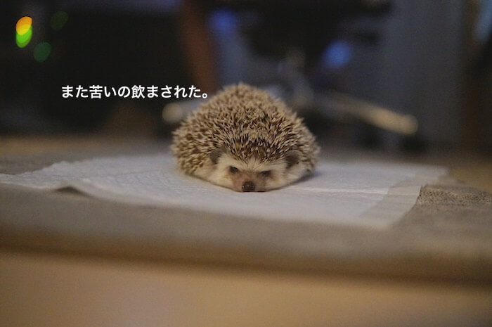 f:id:chikojirou:20170518221346j:plain