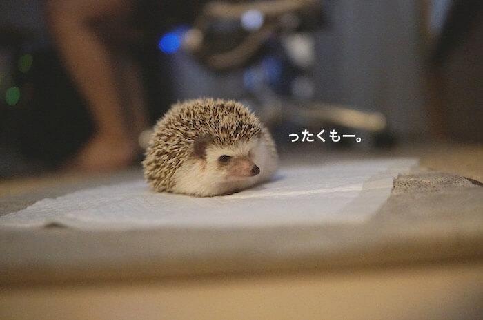 f:id:chikojirou:20170518221358j:plain