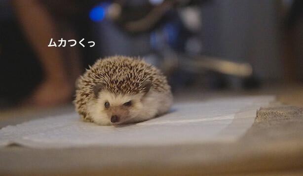 f:id:chikojirou:20170518221409j:plain