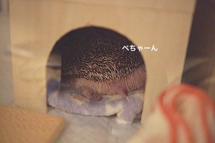 f:id:chikojirou:20170519214155j:plain
