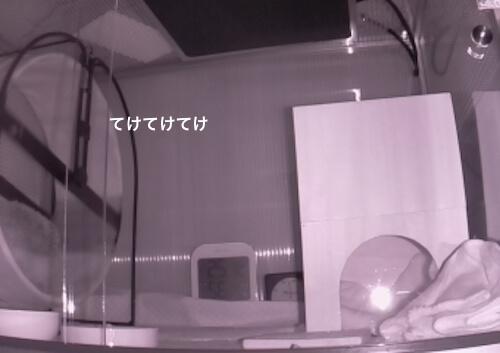 f:id:chikojirou:20170519214259j:plain