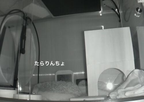 f:id:chikojirou:20170519214340j:plain