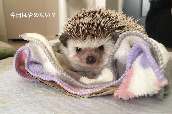f:id:chikojirou:20170519214400j:plain