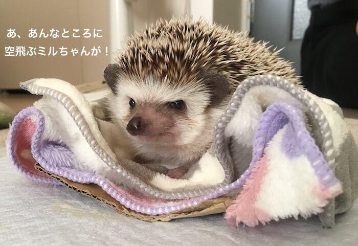 f:id:chikojirou:20170519214413j:plain
