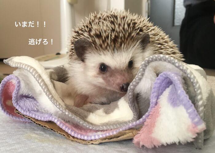 f:id:chikojirou:20170519214424j:plain