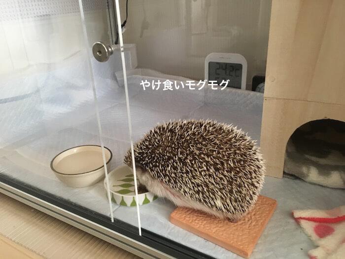 f:id:chikojirou:20170519214436j:plain