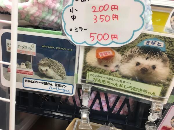 f:id:chikojirou:20170520204656j:plain