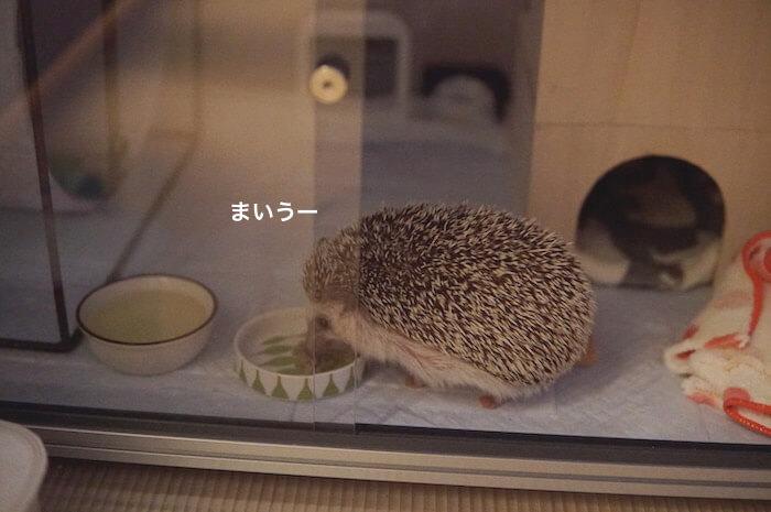 f:id:chikojirou:20170520204804j:plain