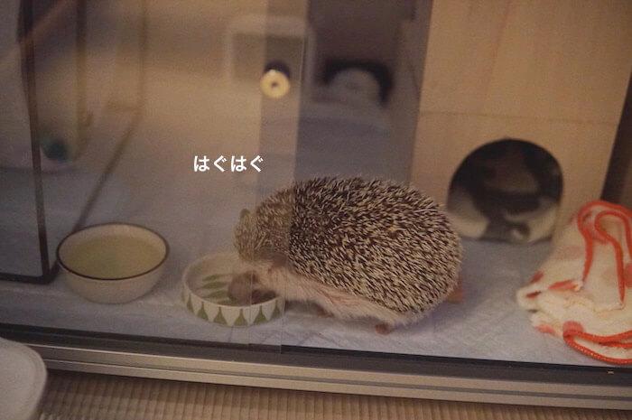 f:id:chikojirou:20170520204814j:plain