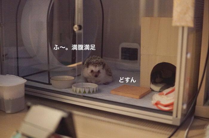 f:id:chikojirou:20170520204823j:plain