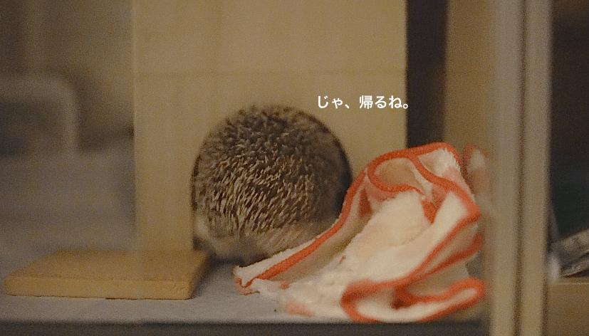 f:id:chikojirou:20170522172633p:plain