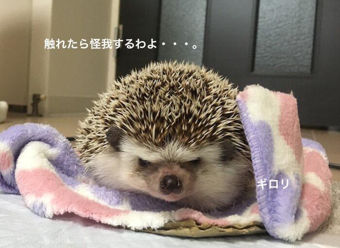 f:id:chikojirou:20170523221032j:plain