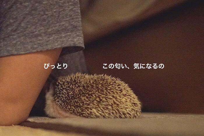 f:id:chikojirou:20170523221051j:plain