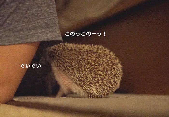 f:id:chikojirou:20170523221103j:plain