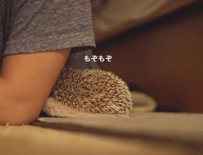 f:id:chikojirou:20170523221117j:plain