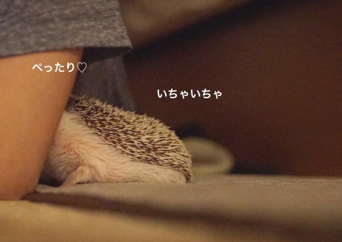 f:id:chikojirou:20170523221128j:plain