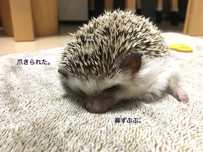 f:id:chikojirou:20170525213440j:plain