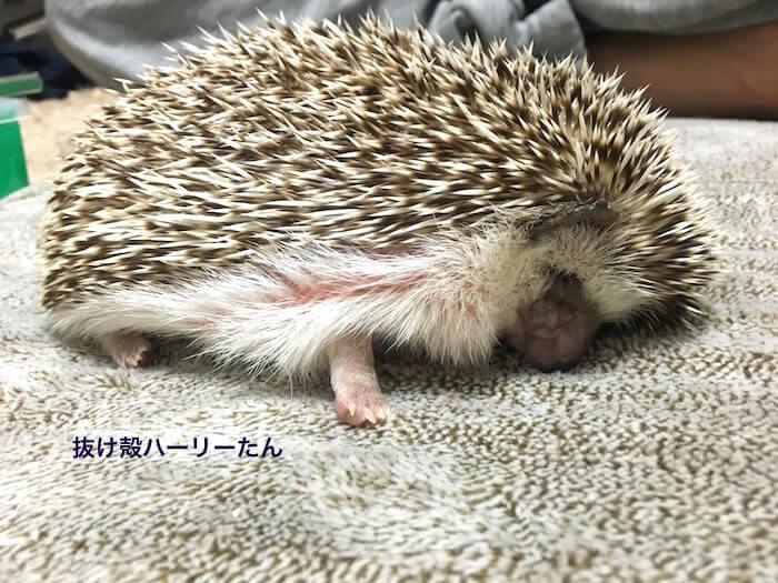 f:id:chikojirou:20170525213453j:plain