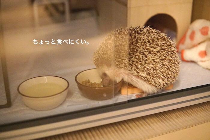 f:id:chikojirou:20170525213516j:plain