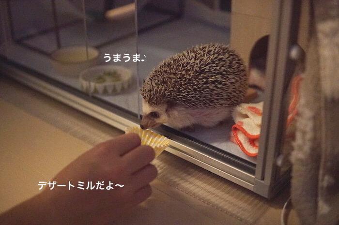 f:id:chikojirou:20170525213603j:plain