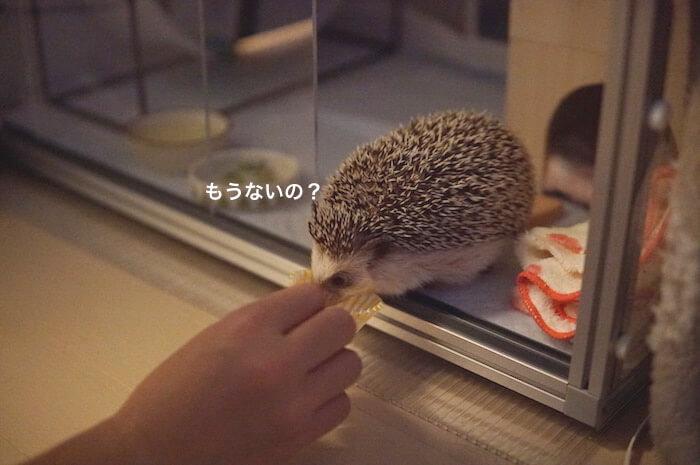f:id:chikojirou:20170525213657j:plain