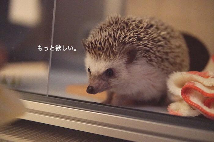 f:id:chikojirou:20170525213713j:plain