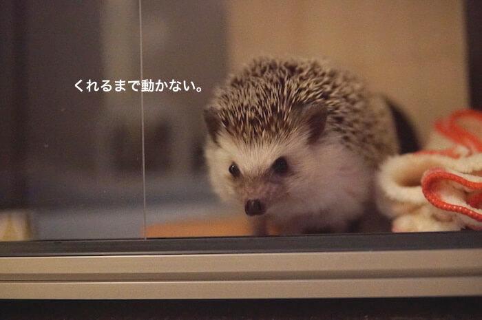 f:id:chikojirou:20170525213728j:plain