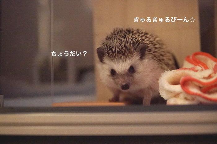 f:id:chikojirou:20170525213743j:plain
