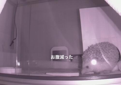 f:id:chikojirou:20170525213757j:plain