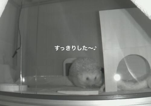 f:id:chikojirou:20170525213846j:plain
