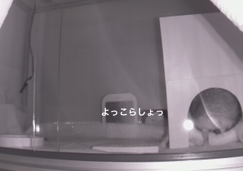 f:id:chikojirou:20170525213857j:plain