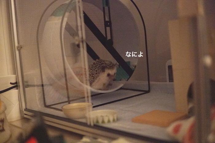 f:id:chikojirou:20170526212720j:plain