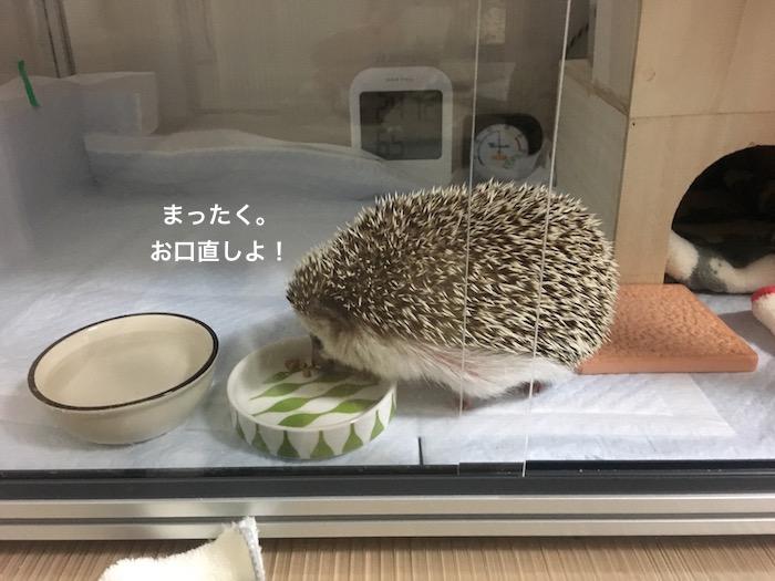 f:id:chikojirou:20170526213059j:plain