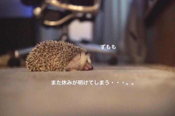 f:id:chikojirou:20170528113812j:plain
