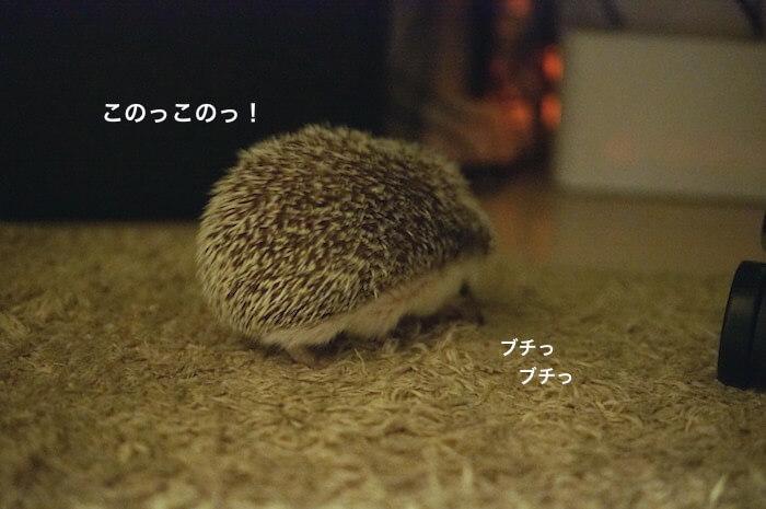 f:id:chikojirou:20170528113836j:plain