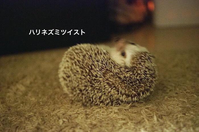 f:id:chikojirou:20170528113900j:plain