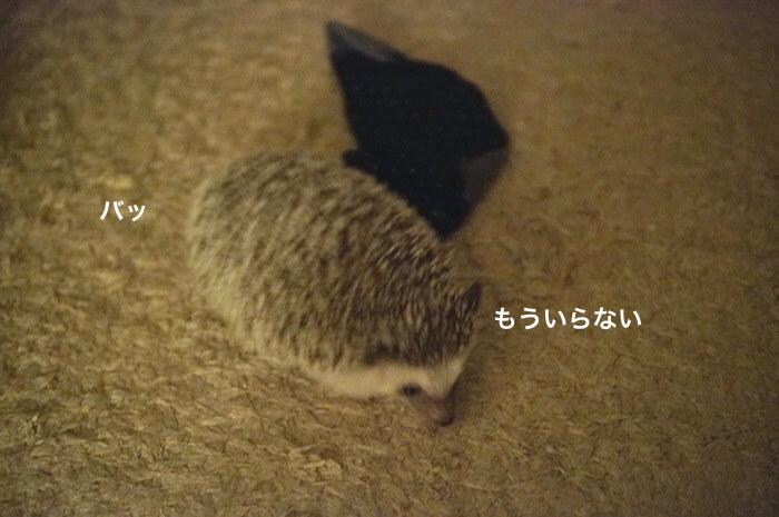 f:id:chikojirou:20170528113926j:plain