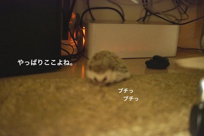 f:id:chikojirou:20170528113939j:plain